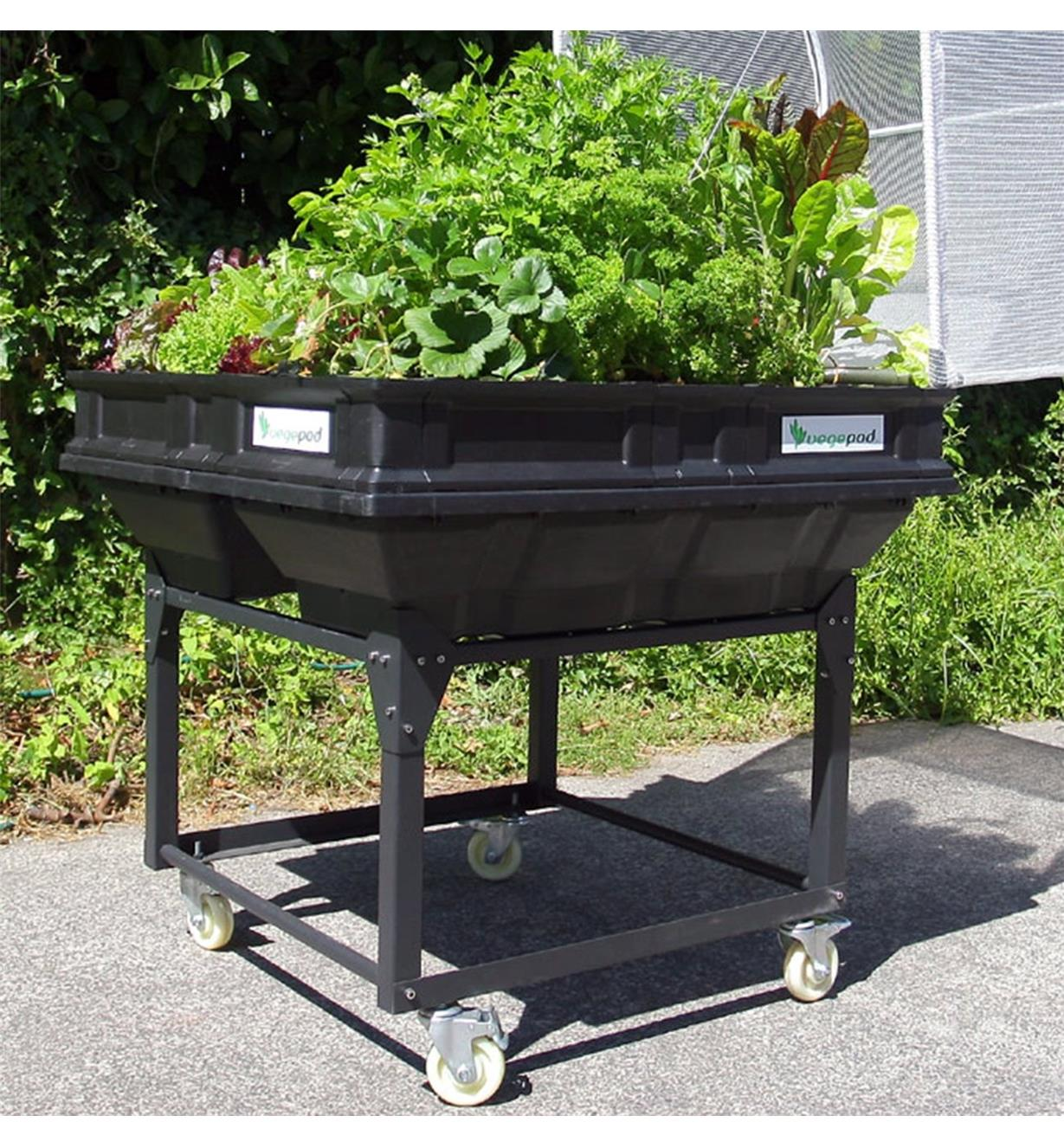 A Vegepod trolley stand supporting a medium Vegepod container garden used to grow plants on a paved surface