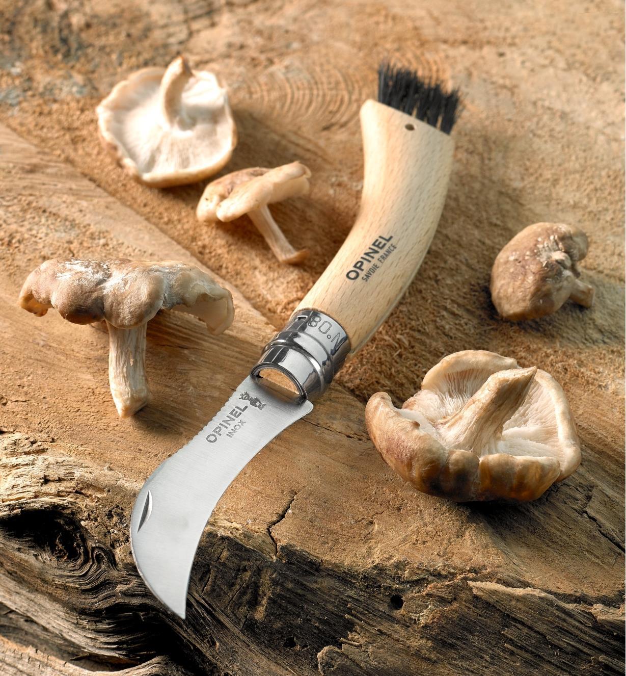 Mushroom knife with harvested mushrooms