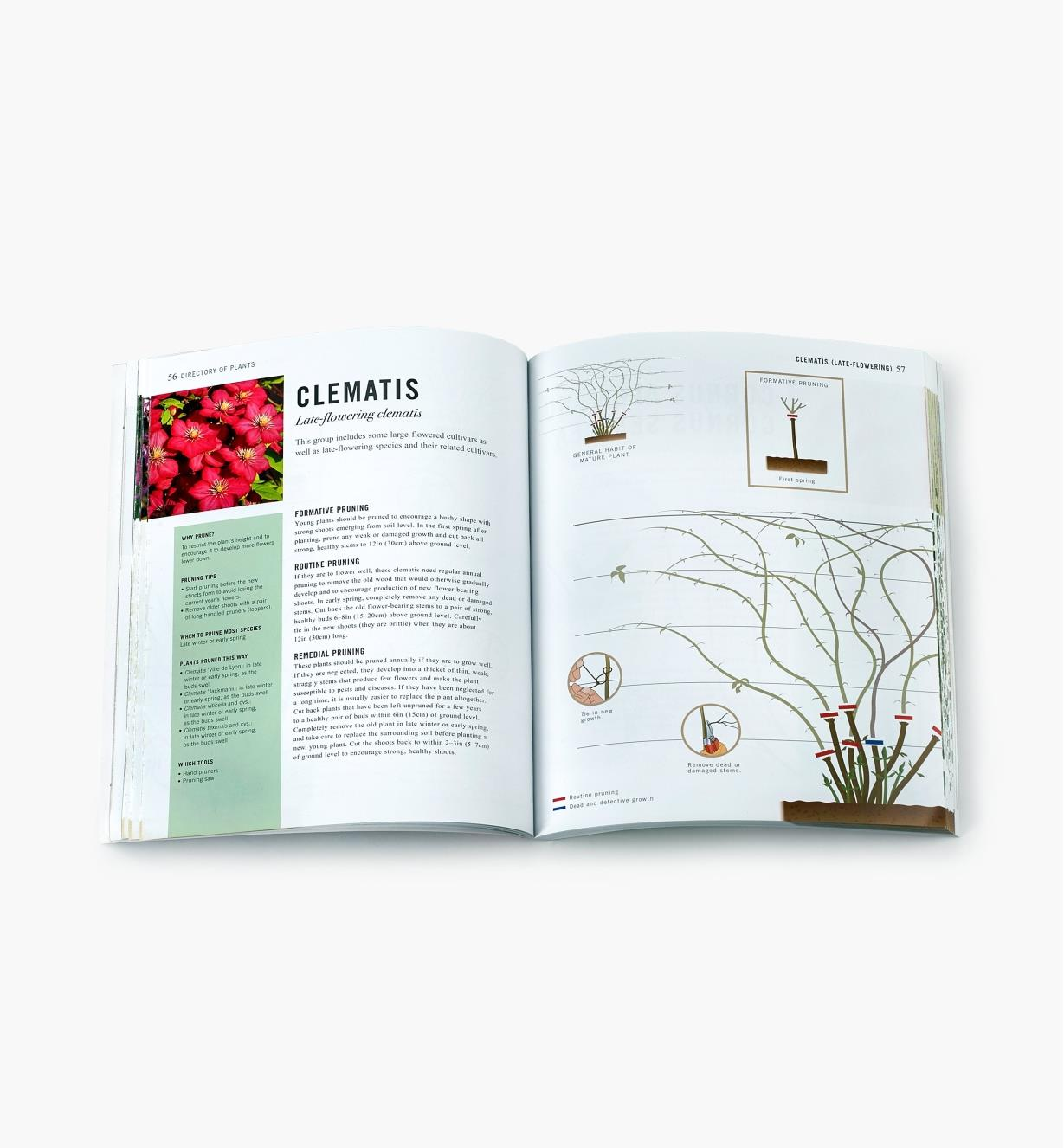 Two-page spread in Pruning Simplified with text and diagrams showing how to prune clematis plants