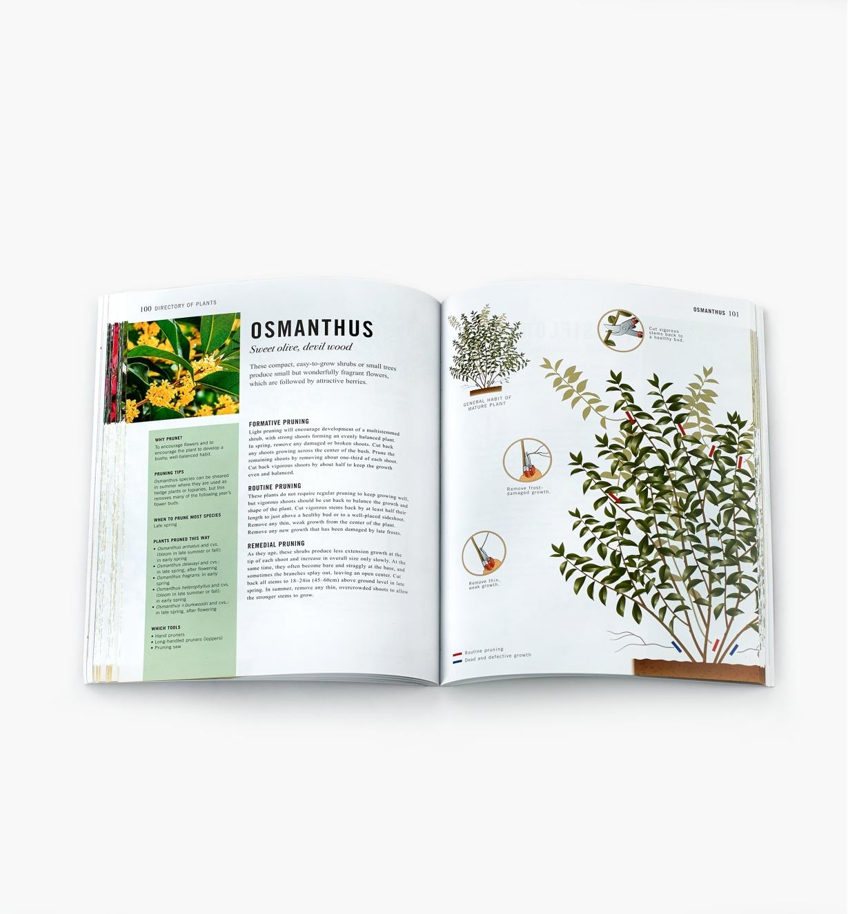 Two-page spread in Pruning Simplified with text and diagrams showing how to prune osmanthus shrubs