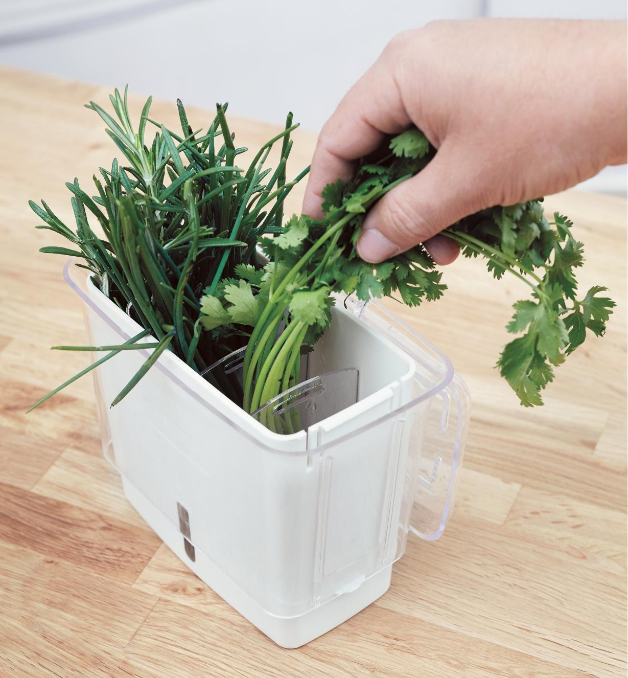 Adding herbs to the compartments in the Herb Keeper