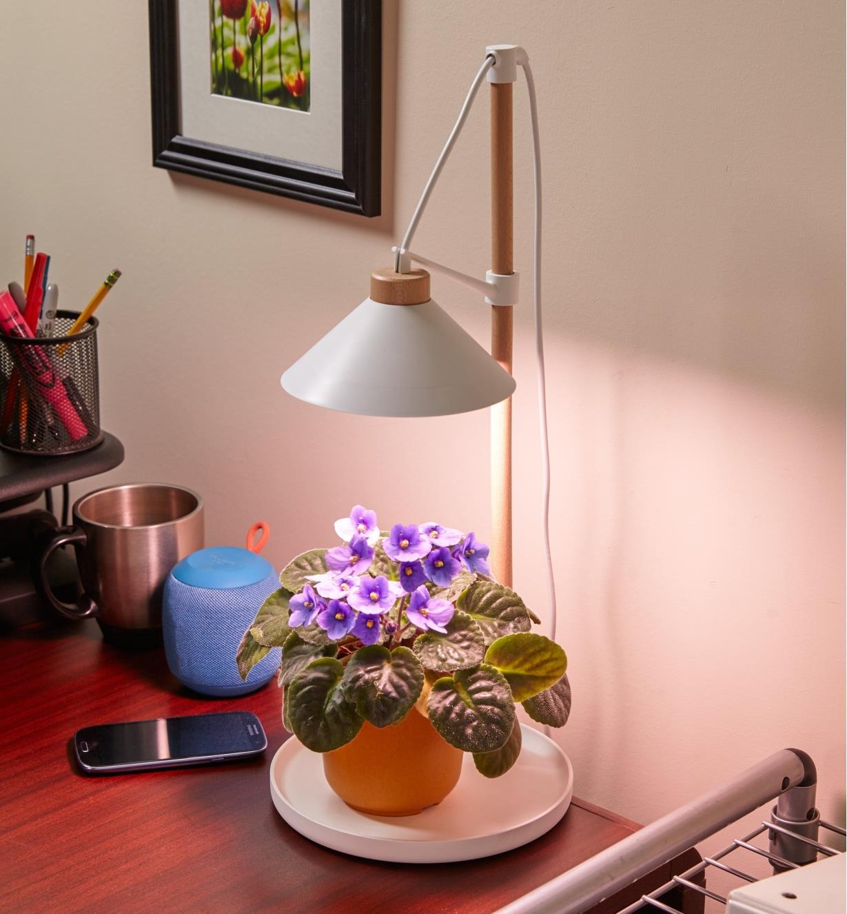 An African violet plant under the LED desk grow light set on an office desk