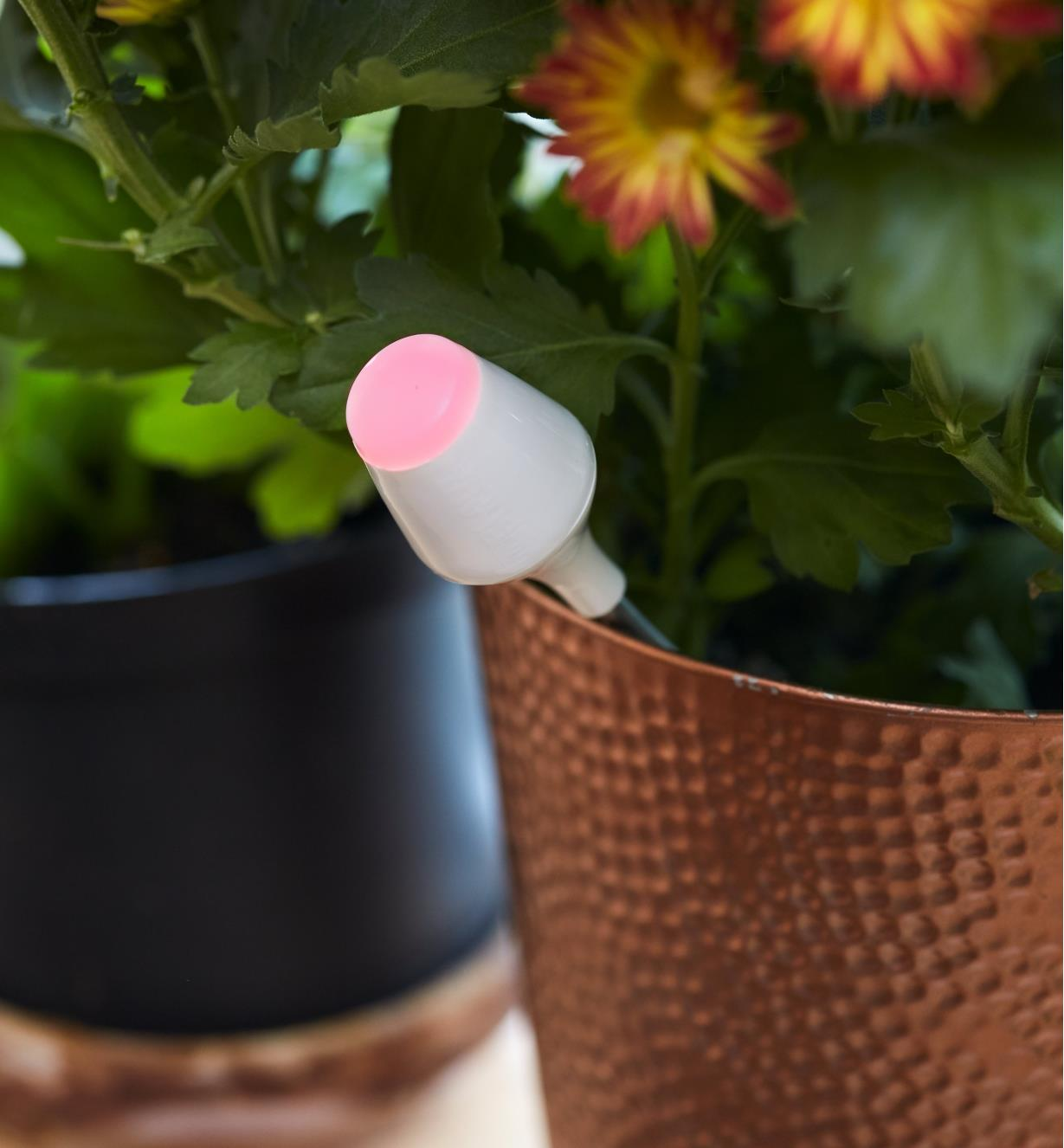 The moisture sensor's blinking red LED indicates that the moisture level in a potted plant's soil is low