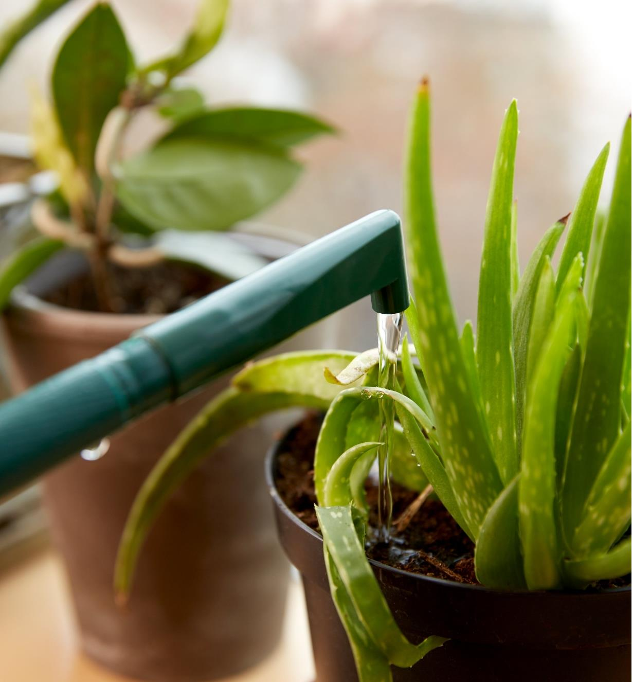 The teapot spout attachment is elbow-shaped to reach into potted plants