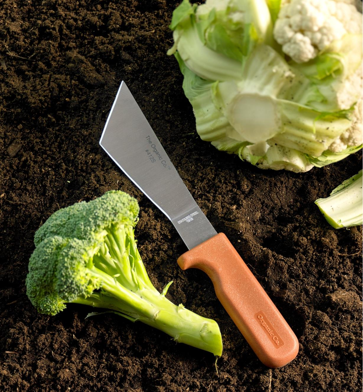 Harvest knife lying on soil between a broccoli floret and a head of cauliflower