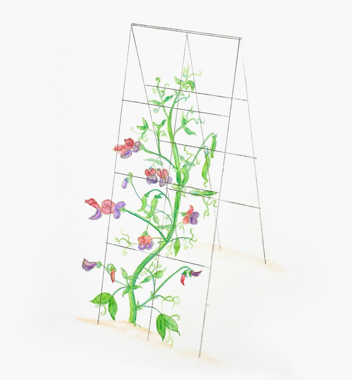 A two-panel folding garden support set in a garden to support a climbing plant