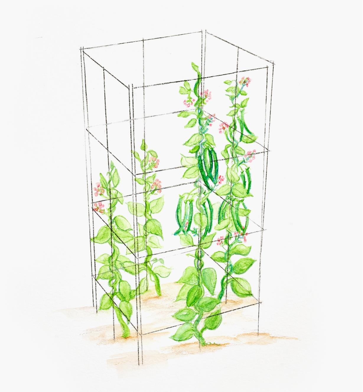 A four-panel folding garden support configured as a square tower to support climbing plants