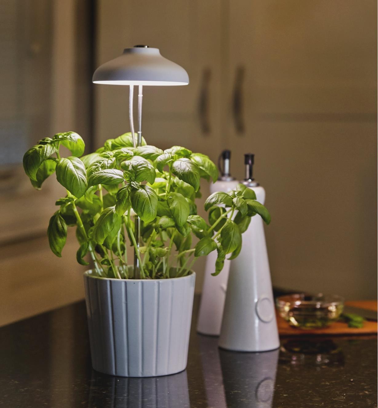 Minilampe horticole à DEL illuminant un pot de fines herbes sur une table