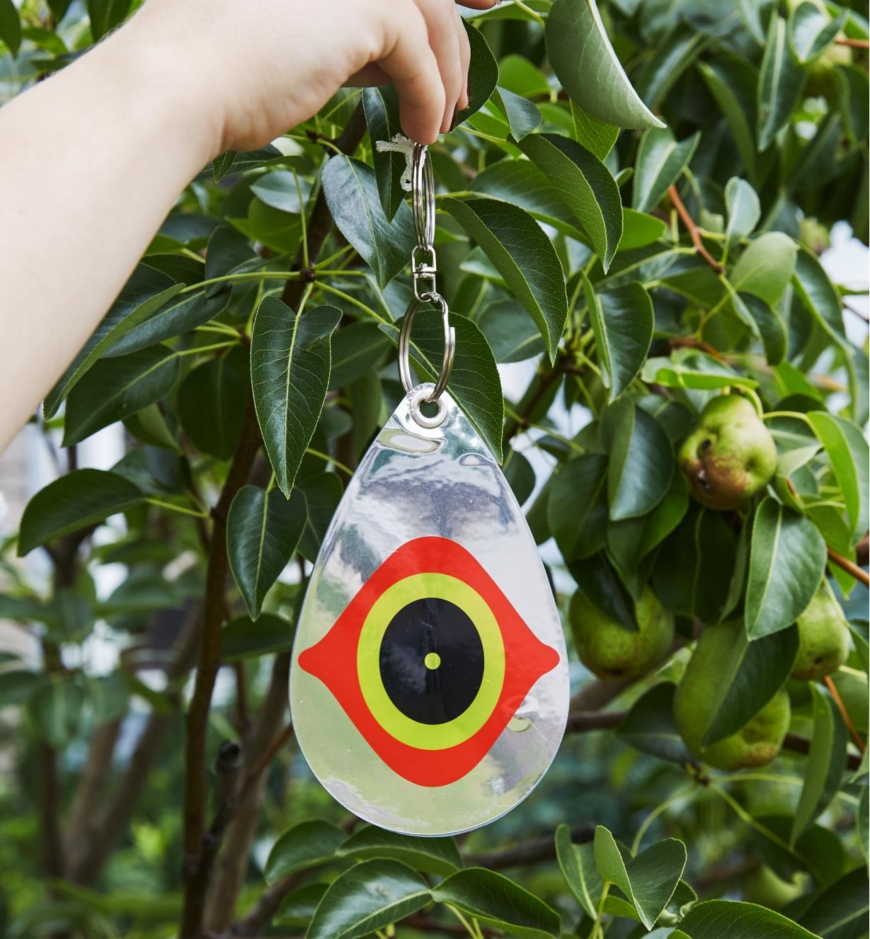 Hanging a Scare Eye Bird Deterrent in an apple tree