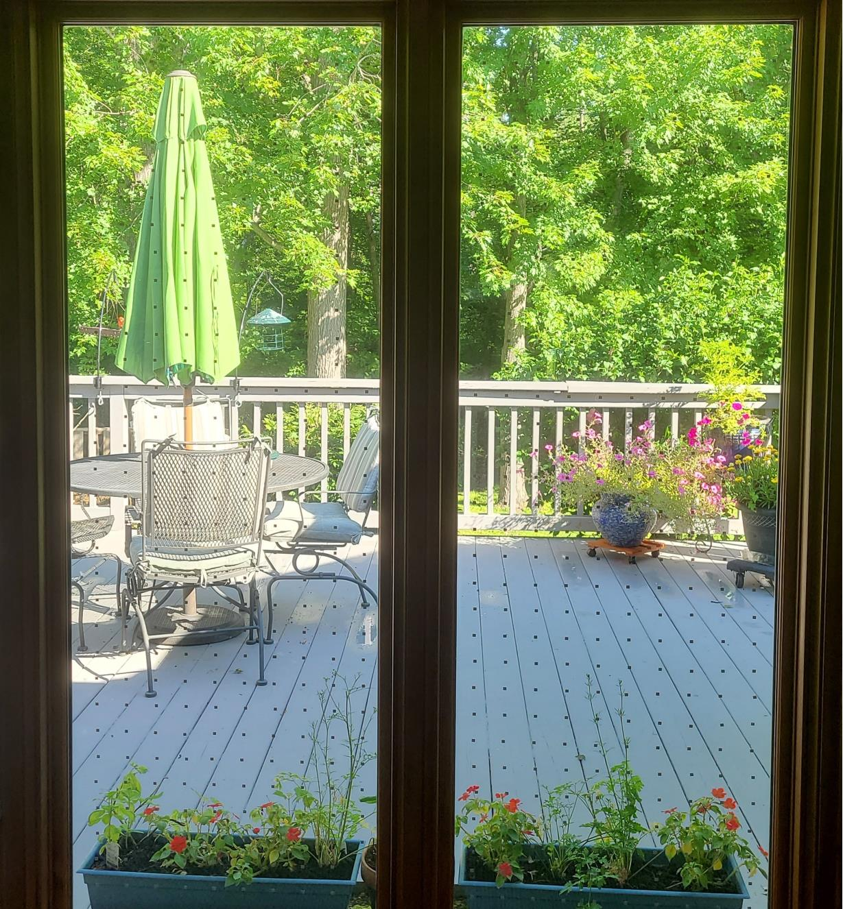 View of a patio through a pair of glass doors covered with Feather Friendly Window Collision Tape squares