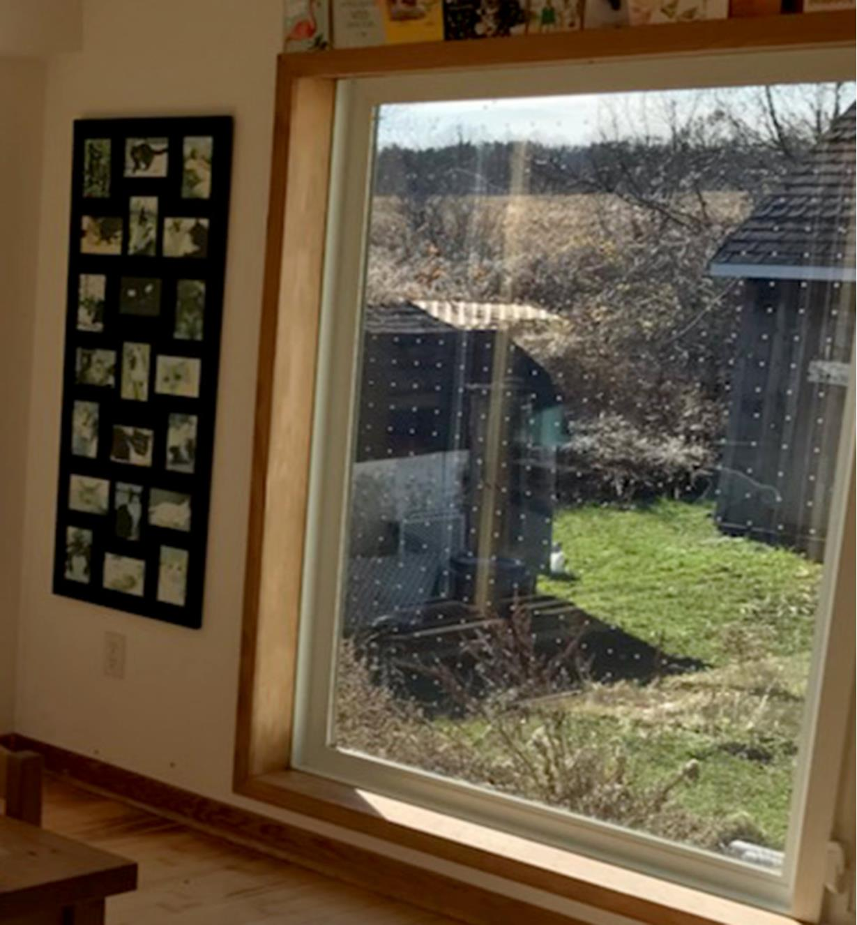 View of a back yard through a window covered with Feather Friendly Window Collision Tape squares